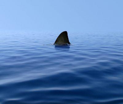 govero istraeliano e squali spia